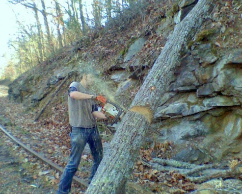 Brody cutting tree down.
